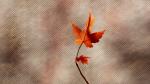 Last Leaf ©2014 LucyMathewsHeegaard