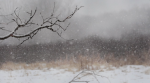 Snowy Branch and Marsh ©2015 LucyMathewsHeegaard